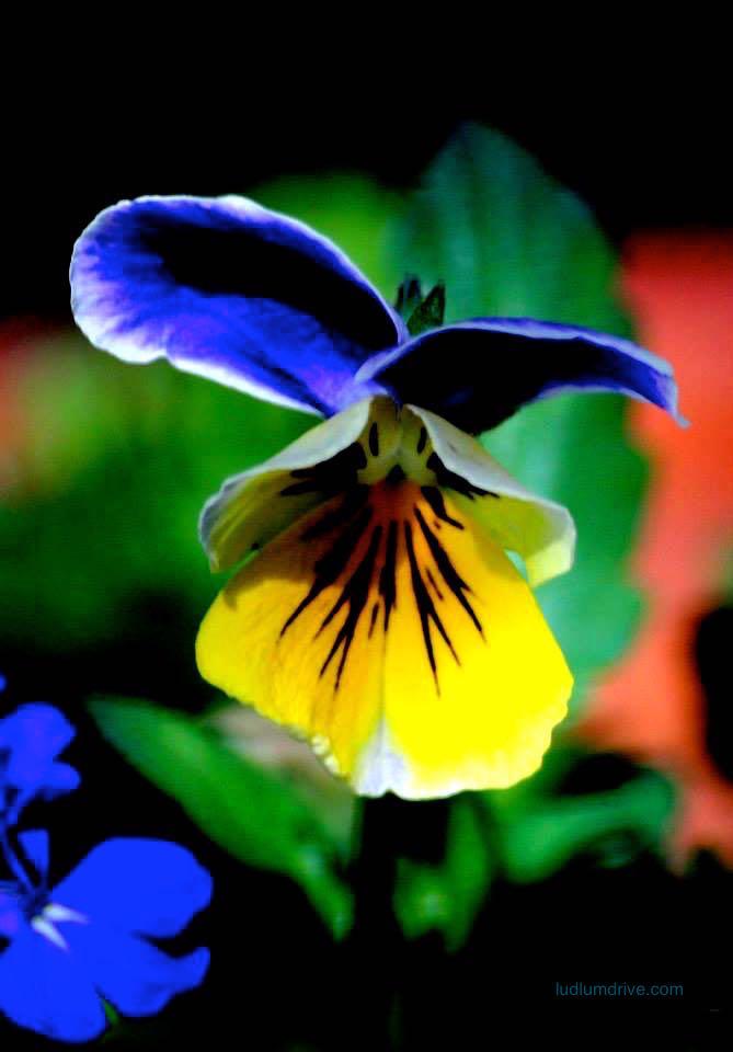 Flower02A